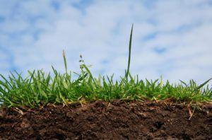 почва особенности